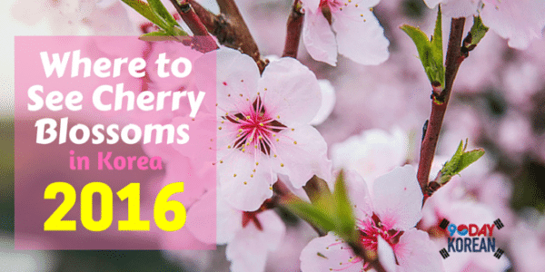 Where to See Cherry Blossoms in Korea 2016_new