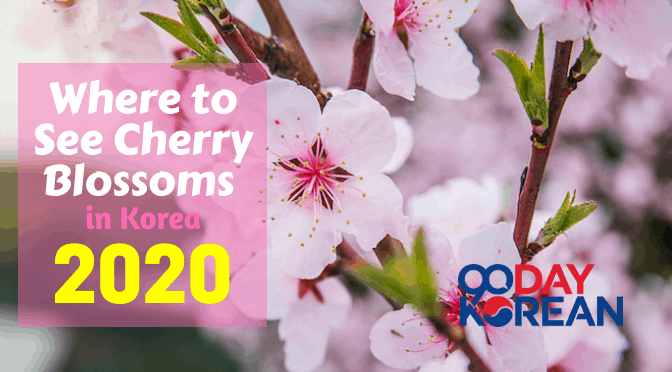 Cherry Blossoms banner