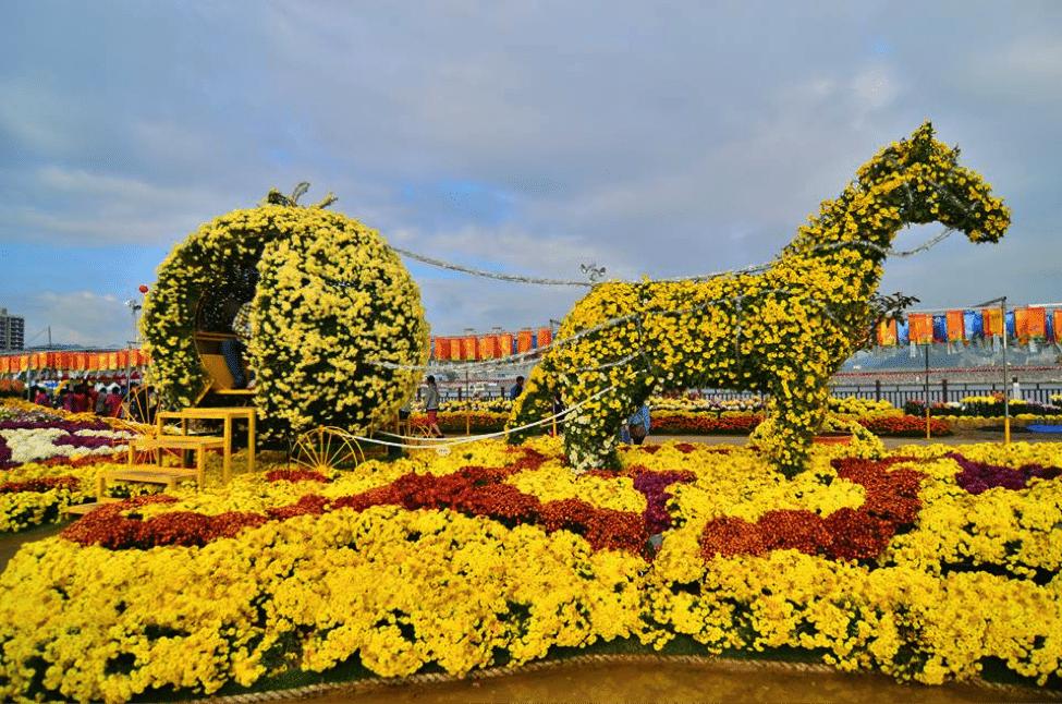 Masan Gagopa Chrysanthemum Festival