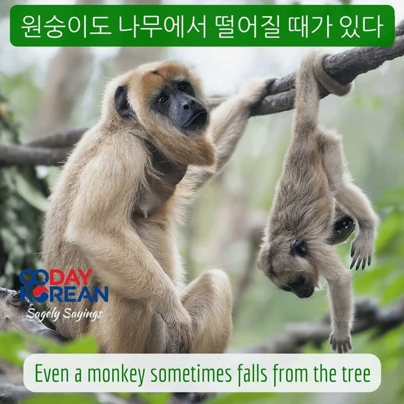 Even a monkey sometimes falls from the tree