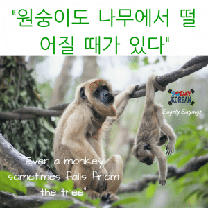 even a monkey sometimes falls 한국어 속담 Korean Proverb