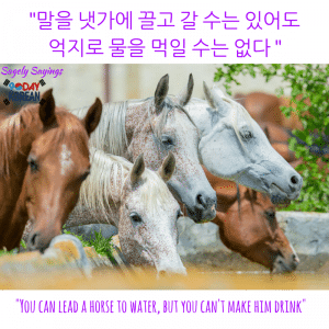 한국어 속담 Korean Proverb - can't lead a horse to water