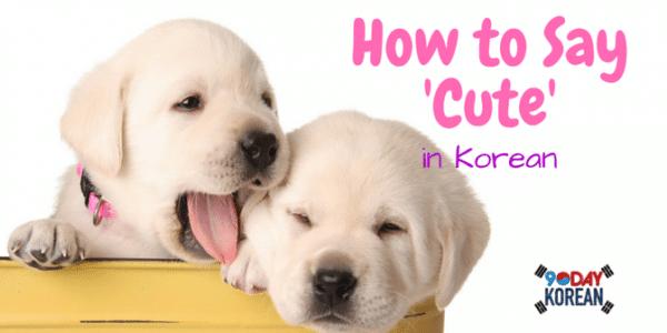 How to Say 'Cute' in Korean