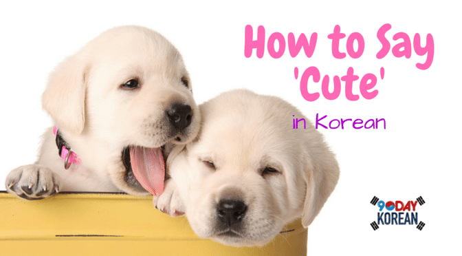 How to Say 'Cute' in Korean