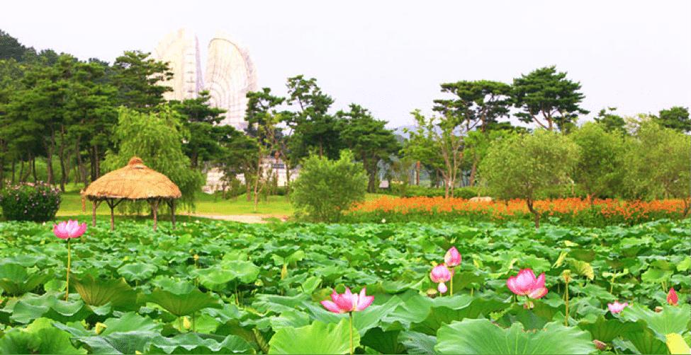 Korean Summer Festivals Buyeo Seodong Lotus Festival