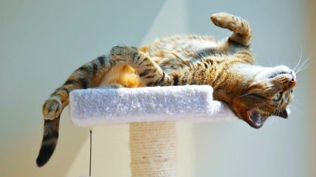 Cat-relatedvocab