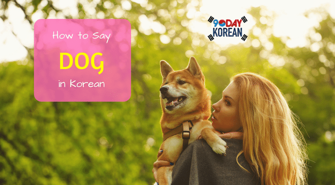 How to Say 'Dog' in Korean