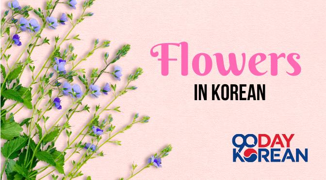 Flowers In Korean