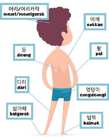 boy with diagram of back body parts in Korean